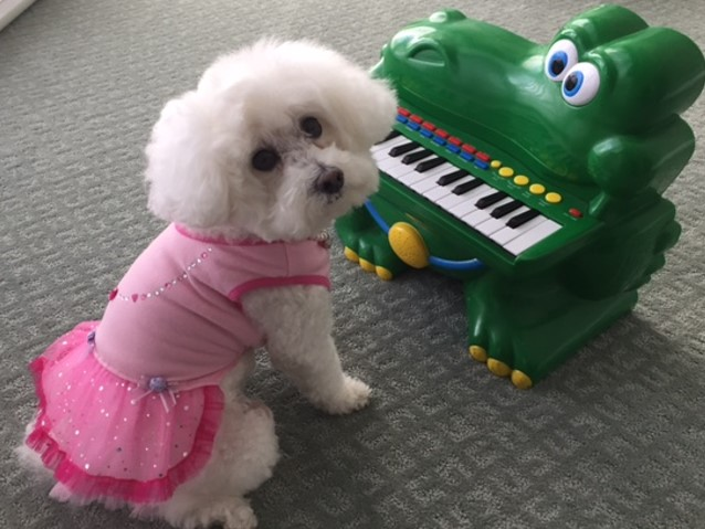 Samantha the Poodle with Her Piano