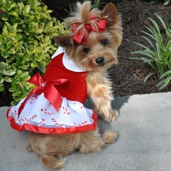 Larger Photo Email A Friend - Christmas Candy Cane Dog Dress, Christmas Dog Dresses, Christmas Dog