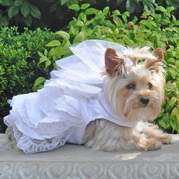 Wedding Dress For Dogs Larger Photo Email A Friend