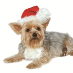 Brighten up the holiday with the Christmasdog costume hat.