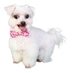 Alex Dog Bow Tie, dog bow ties, bow ties for dogs, dog wedding attire, valentine dog attire