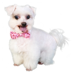 Alex Dog Bow Tie, dog bow ties, bow ties for dogs, dog wedding ...