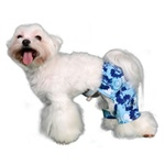 Mykonos Dog Swim Trunk - Dog Swimsuits/Dog Swimwear - BowWowsBest.com | Dog Swimsuits, Designer Dog Swimsuits, Dog Swimwear, Designer Dog Swimwear, Dog Clothes, Dog Clothing, Designer Dog Clothes, Designer Dog Clothing