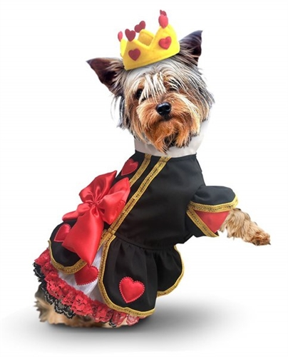 Image result for queen dog costume