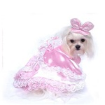 Lots of lace together with Pink Satin on this adorable girl dog dress costume.  Fits Small to Medium Dogs