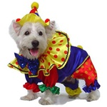 Matching hat tops off this shinny and very colorful clown. Fits Small to Medium Dogs